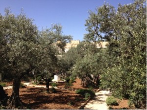 I took this photo from the Garden of Gethsemane looking toward the Eastern Gate. You can see it in the background. [Jerusalem, April 2014]